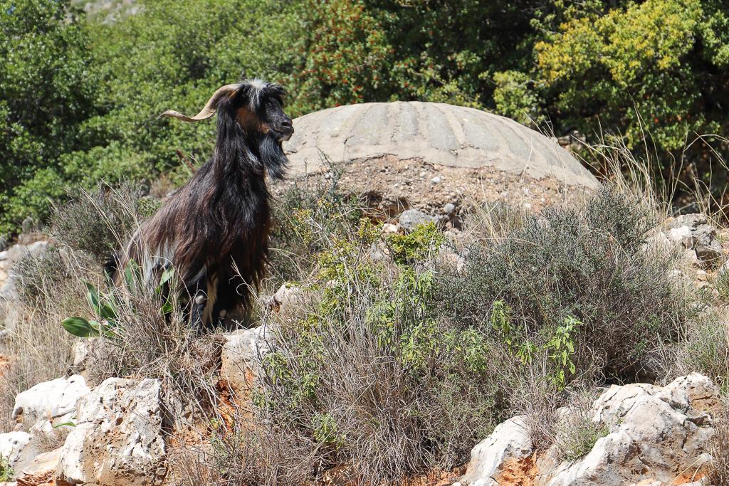 Bunker nabij Gjipestrand | Himare | Albanië